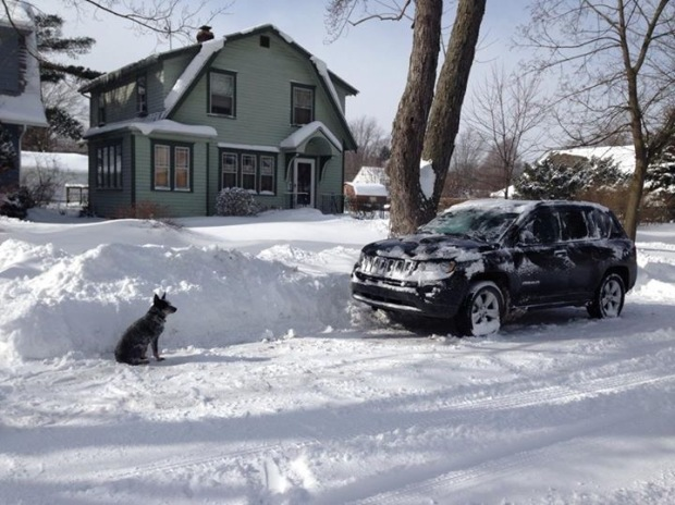 Lu overseeing my snow removal efforts.