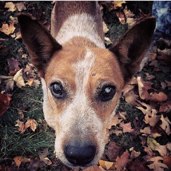 Hilli in October, right after her adoption. She helped my son and I rake leaves in the yard.