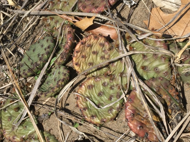 Cacti- controlled burn victims