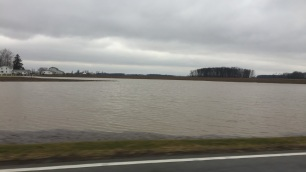 Flooding in a field due to a ditch. This is in eastern Marshall County, Indiana